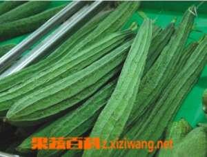 丝瓜的功效与作用 丝瓜可治疗的疾病